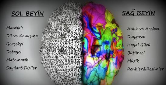 sağ beyin sol beyin baskınlığı ile ilgili görsel sonucu